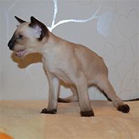 Котенок Ajax
