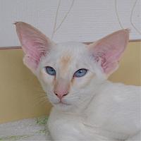 Котенок Holly